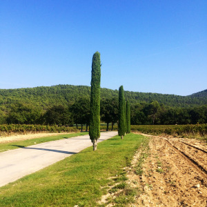 SARAH JANE YOUNG, SHEISSARAHJANE, CHATEAU LACOSTE, FRANCE, PROVENCE, PEUGEOT, PEUGEOT 308, EUROPEAN ROAD TRIP, FASHION BLOGGER, LIFESTYLE BLOGGER, TRAVEL BLOGGER,